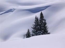 tree_in_snow.jpg